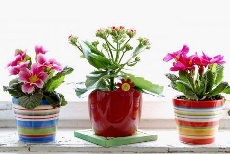 Саксийни цветя