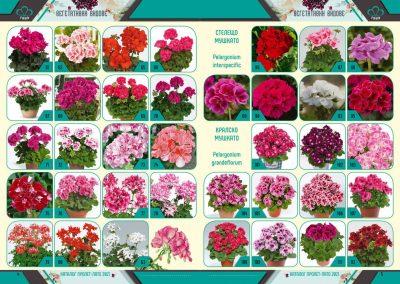 Razcvet_Catalogue-Spring-Summer-2021--3